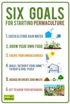 Infografik Grundschritte Permakultur  In Englisch