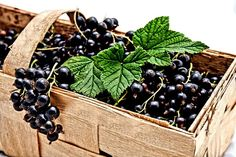 ✓ Free for commercial use ✓ No attribution required ✓ High quality images. Garden Guide, Recipe Community, Types Of Cancers, A Food, Berries, Pesto, Make It Yourself, Health Benefits, Black