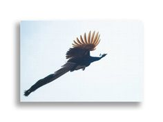 Flying Peacock - Canvas