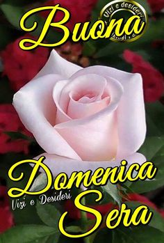 Sunday, Rose, Ely, Facebook, Woman, Italia, Flowers, Good Night, Domingo