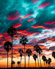 Sunset over Venice Beach, California Beautiful Photos of America Cute Wallpapers, Wallpaper Backgrounds, Sunset Wallpaper, Tropical Wallpaper, Gold Wallpaper, Tree Wallpaper, Nature Wallpaper, Beautiful World, Beautiful Places