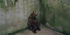 Cette poignante photo résume à elle seule le sort tragique des animaux de zoo