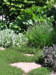 Layered Landscape Liriope Front Border Boxwood Hedge