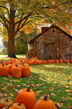 Autumn Day ... harvest pumpkins at the old stone house.