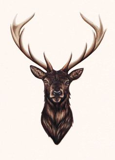 stag drawing tumblr - Google Search                                                                                                                                                                                 More