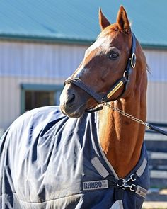 Charismatic returned to the United States from the JBBA Shizunai Stallion Station in Japan on Dec. 4 and was pensioned at Old Friends, the Thoroughbred Retirement Center in Georgetown, Ky. He died Feb. 19, 2017. :(
