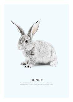 online retailer fa182 0d18f 23 Best Posters images   Frames, Photo art, Nordic design