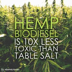 Hemp as a BioDiesel? Check out the link to learn more:  hemphelps.org/blogs/news
