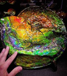 Ammolite is a rare iridescent gemstone formed from the fossilized shell of Ammonite.