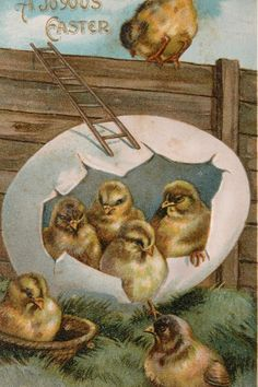 Easter Post Card w/ Chicks and Big Egg - Germany- Embossed.