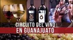 4 imprescindibles del Circuito del Vino en Guanajuato