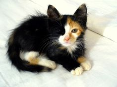 Oh. My. Gosh. I LOVE this kitty -- it looks like a mixture of my two late kitty loves, Smudge and Cozy.