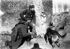 French war dog 1915