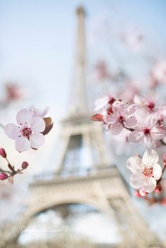 Plum blossoms & Eiffel Tower.