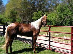 barrel horses for sale barrel racing lessons