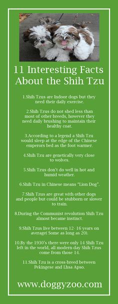 Now I can't get a Shih-tzu because it's an indoor dog! Shih Tzus, Shih Tzu Hund, Perro Shih Tzu, Shih Tzu Puppy, Cute Puppies, Cute Dogs, Dogs And Puppies, Doggies, Puppies Tips