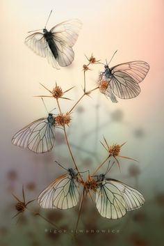 Broderie papillons...                                                                                                                                                                                 Plus