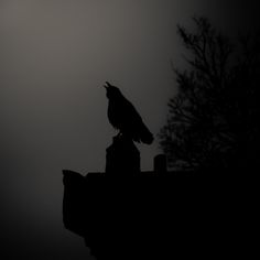 Alone in the Twilight