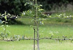Simple and small projects can be created with Lockjaw's individual component collection - only buy individual components that you need for small jobs. Wire Fence, Wooden Fence, Espalier Fruit Trees, Anchor Systems, Wire Installation, Timber Fencing, Small Space Gardening, Stainless Steel Wire, Climbing Roses