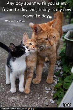 "* * MOM CAT: "" Remembers to notz lie down wif dogs or ya getz up wif fleas."""