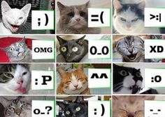 Caticons :D