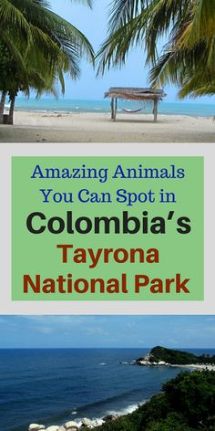 Just another reason to visit Tayrona National Park near Santa Marta!