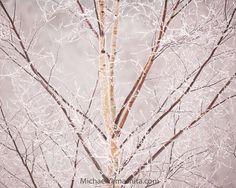 Photograph by Michael Yamashita @yamashitaphoto - ice clad birch in Hokkaido's Daisetsuzan National Park. #daisetsuzan #hokkaido #nationalparks #japan #birch #winter #ice #@natgeocreative @thephotosociety by natgeo