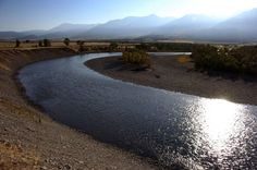 Governor declares state of emergency for Yellowstone River fish kill