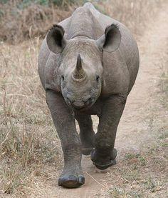 Rhino.  Move it or lose it.