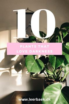 Maybe your favorite plant loves dark spaces? That's Love, Place Cards, Planters, Place Card Holders, Spaces, Dark, Decor, Lily, Decoration