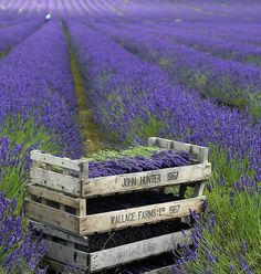 Can you smell the lavender? www.mysoulfulhome.com