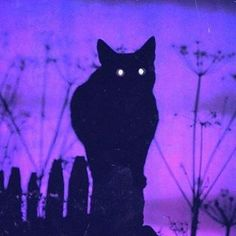 spoopy_1975_pxstel_sxm/2016/10/30 15:25:28/i want a black cat . . . . #the1975 #mattyhealy #adamhann #georgedaniel #rossmacdonald #arcticmonkeys #alexturner #jamiecook #music #rock #indie #tumblr #aesthetic #ptv #sws #bmth #thekooks #thestrokes #thesmiths #thekillers #bands #alternative #tøp #twentyonepilots #thejoker #harleyquinn #suicidesquad #british #britishindierock