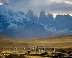 Patagonia Chile. some day, some day...