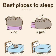 Así son los gatos...