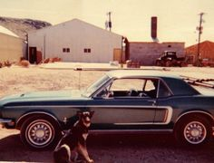 "289 First car but was a shared car. Worked in Hurricane Utah. ""Roach"" resting next to my car. She was a good dog, belonged to the operator of the business. 1968 Mustang, First Car, Best Dogs, Utah, Cars, Business, Autos, Car, Store"