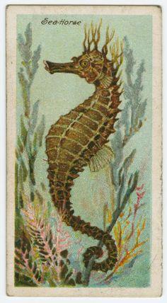 Cigarette card of a seahorse, 1903.      & I love seahorses & i love cigarettes. I want this.