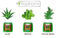 Aloe , menta , pin de brad , sunt aromele care dau prospetime si miros exagerat de placut sarii de baie Flopharm Cosmetics, Plants, Products, Beauty Products, Flora, Plant, Planting, Drugstore Makeup