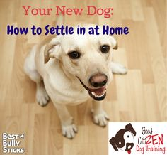 New dogs need to acclimate to their new home. Tips on how to get your dog adjusted!