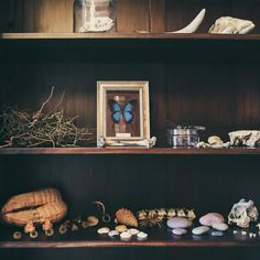 Antique shelf love