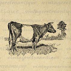 Printable Image Dutch Belted Cow Graphic Animal Download Illustration Digital Antique Clip Art Jpg Png Eps 18x18 HQ 300dpi No.3550 @ vintageretroantique.etsy.com