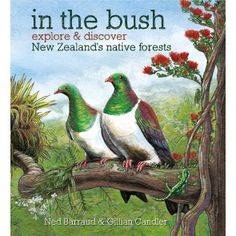 the nz bush classroom resources - Google Search