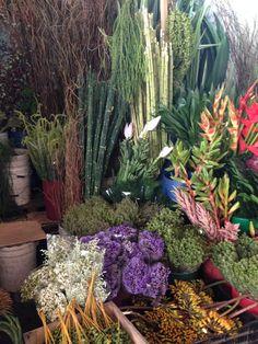 Mercado de Jamaica  México  Flores flowers