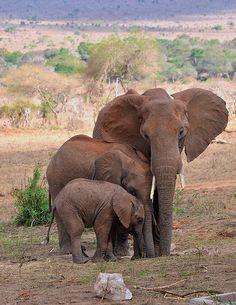 Africa: Familia de elefantes bebe de uma pequena cisterna, no Parque Nacional Taita Hills, no Quenia.