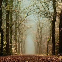 Netherlands mystical forest