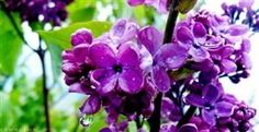 <3 this purple