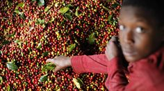 img.zeit.de wirtschaft 2014-08 kaffee-fairtrade wide__1300x731