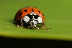 Rumbled by a ladybird #1