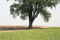 LEICA SUMMICRON-M f2/50mmの作例写真7