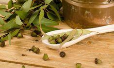 Eucalipto, planta medicinal para resfriados y problemas respiratorios