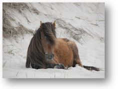 ... conservation biology. Sable Island is truly one of the most interesting ...    mcloughlinlab.ca